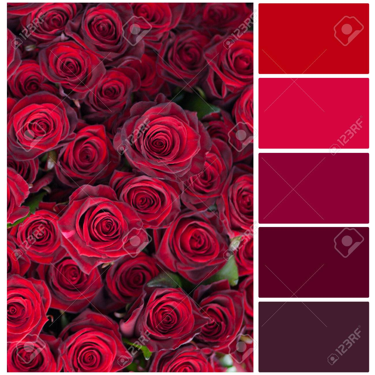 Red Roses Big Bouquet Colour Palette With Complimentary Swatches