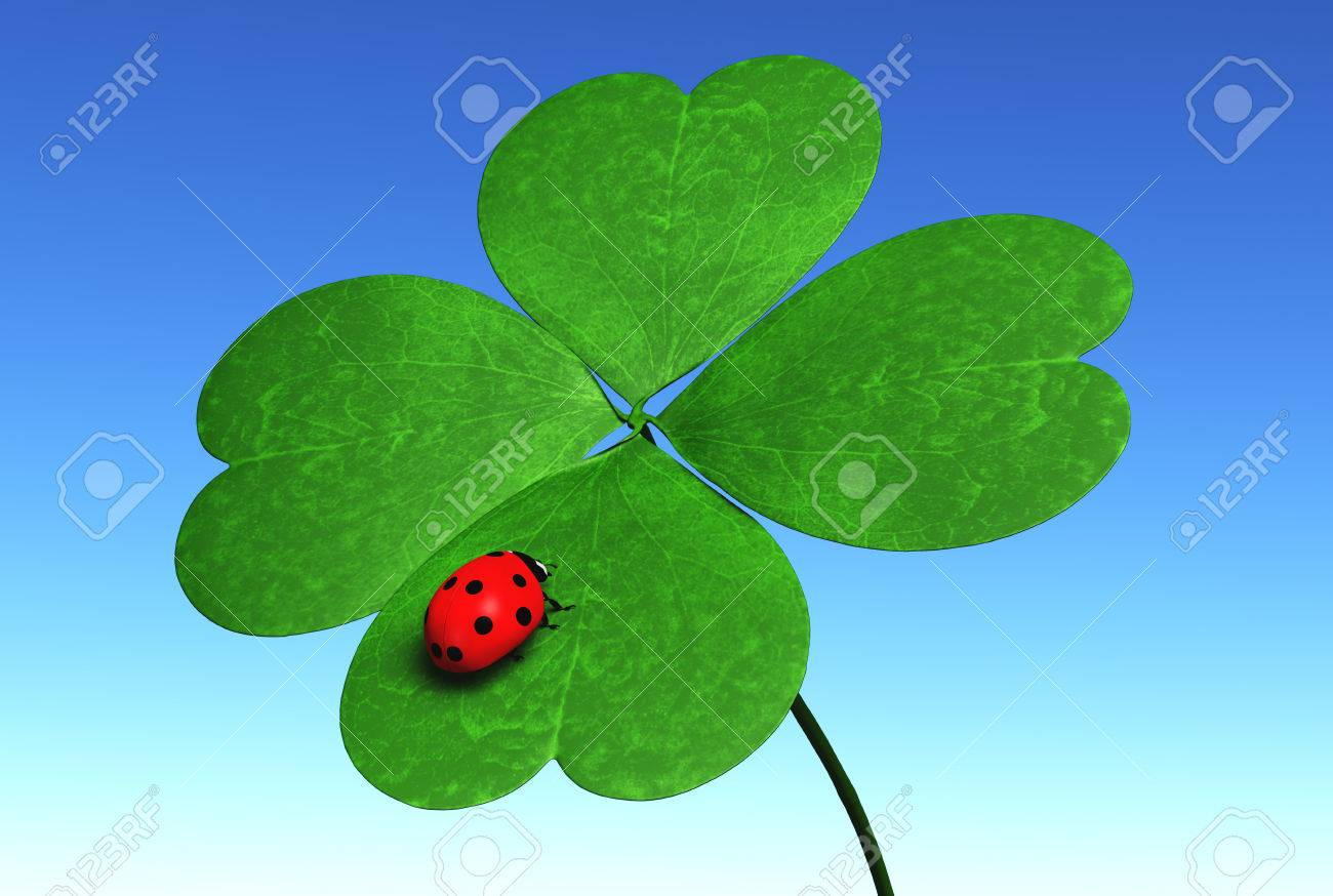 closeup of four leaf clover that has a red ladybug on one leaf