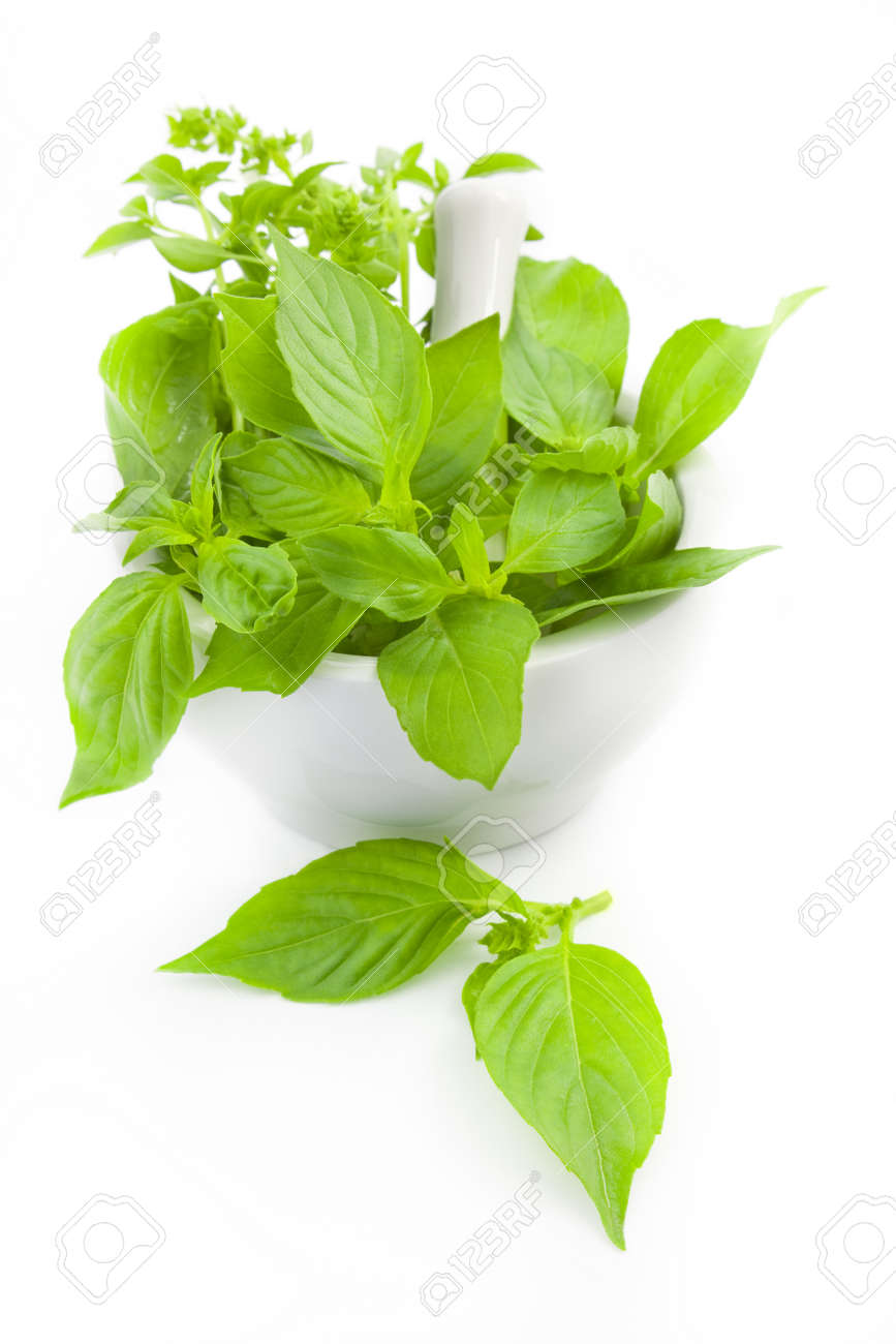 Fresh basil  herbs whith mortar and pestle / isolated on white Stock Photo - 9925703