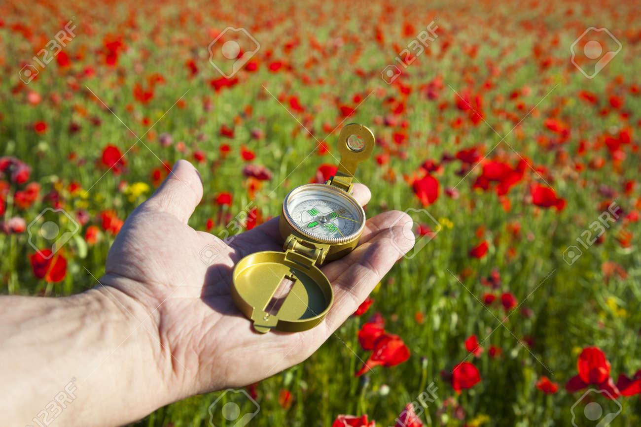 Compass in a Hand / Discovery / Beautiful Day / Red Poppies in Nature Stock Photo - 11272326
