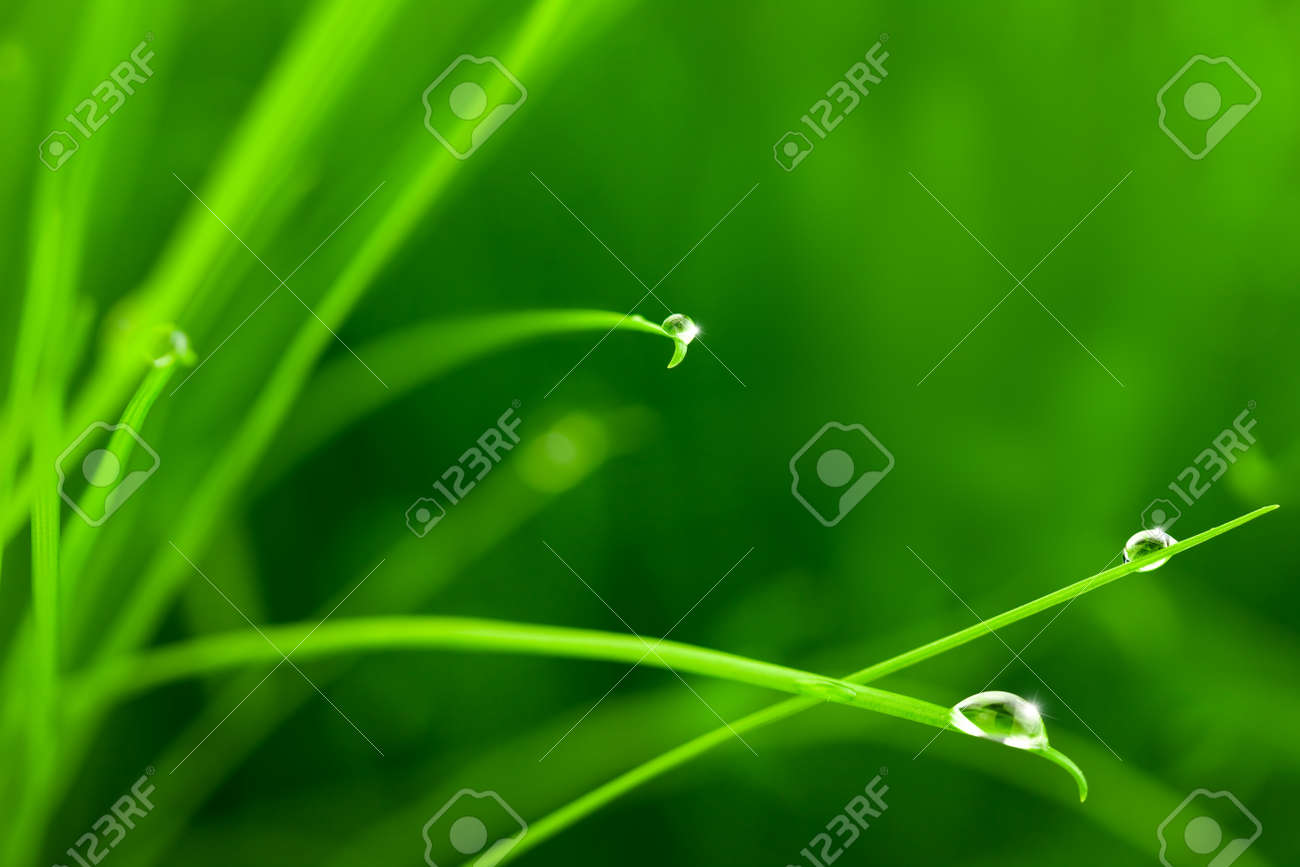 Water Drops on Grass with Sparkle / copy space Stock Photo - 13119699