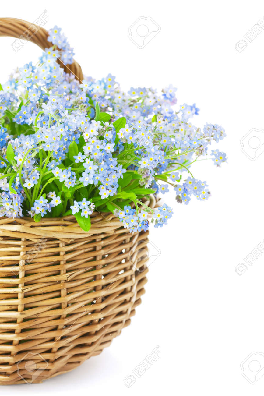 Bouquet Of Blue Spring Flowers In Basket Isolated On White
