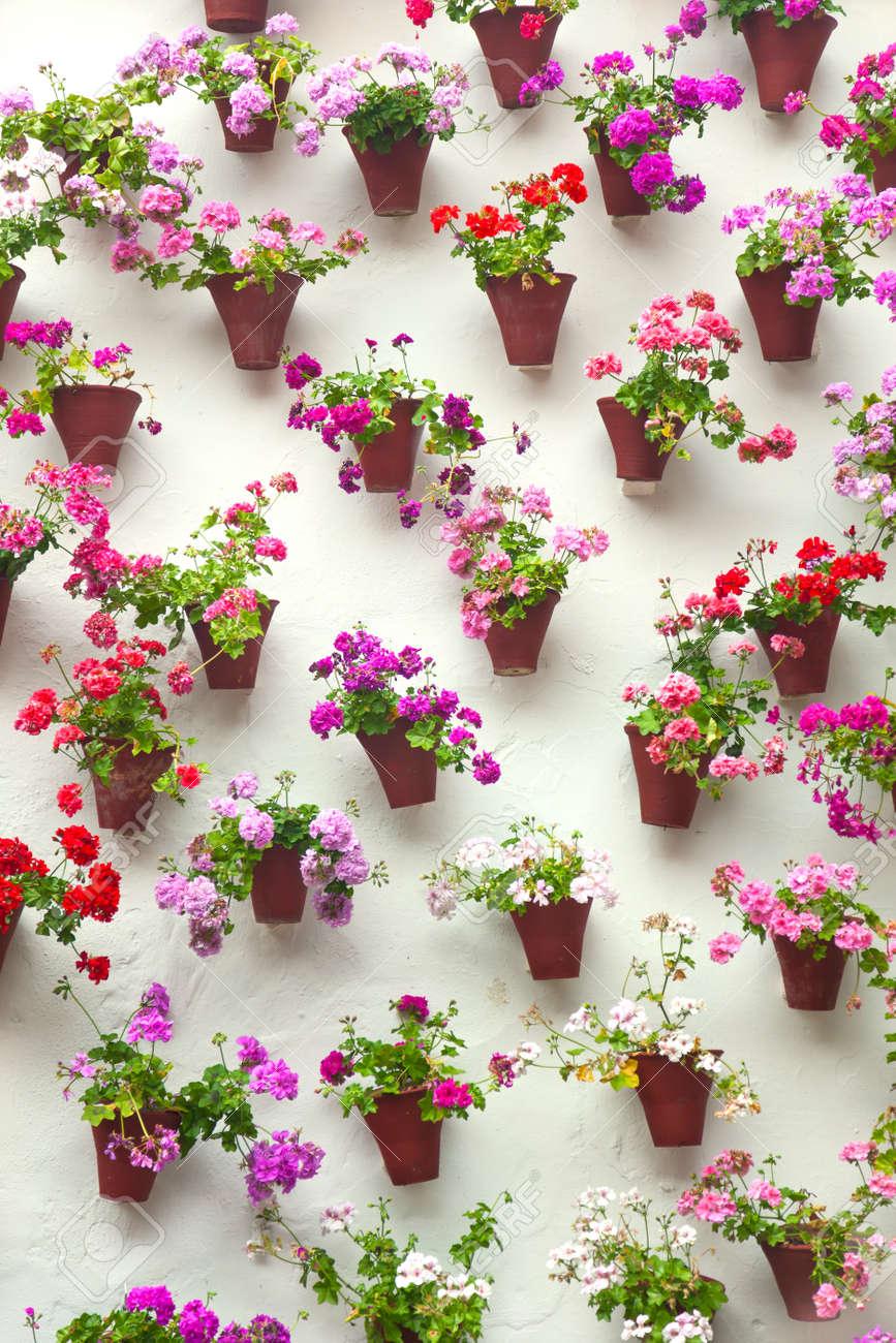 Macetas Y Flores De Colores Sobre Una Pared Blanca Vieja Ciudad