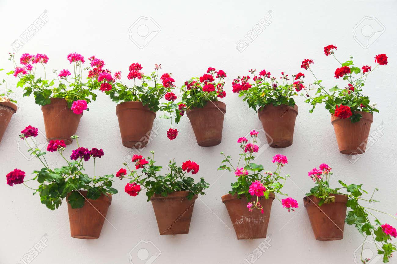 Blumentöpfe Und Rote Blume Auf Eine Weiße Wand Mit Kopie Platz Für ...
