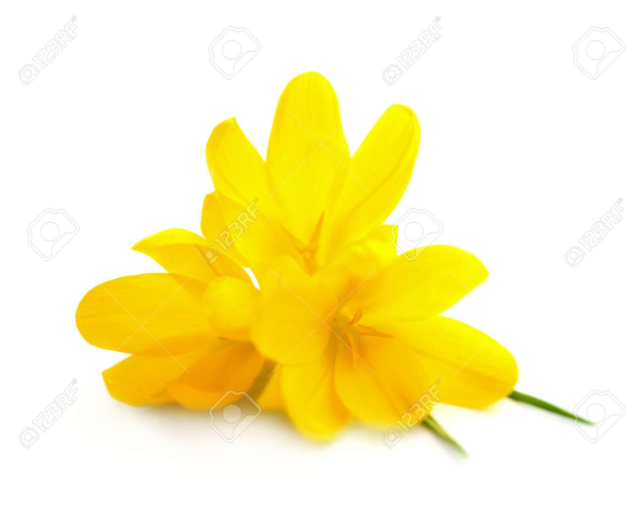 Жёлтые цветы на белом фоне