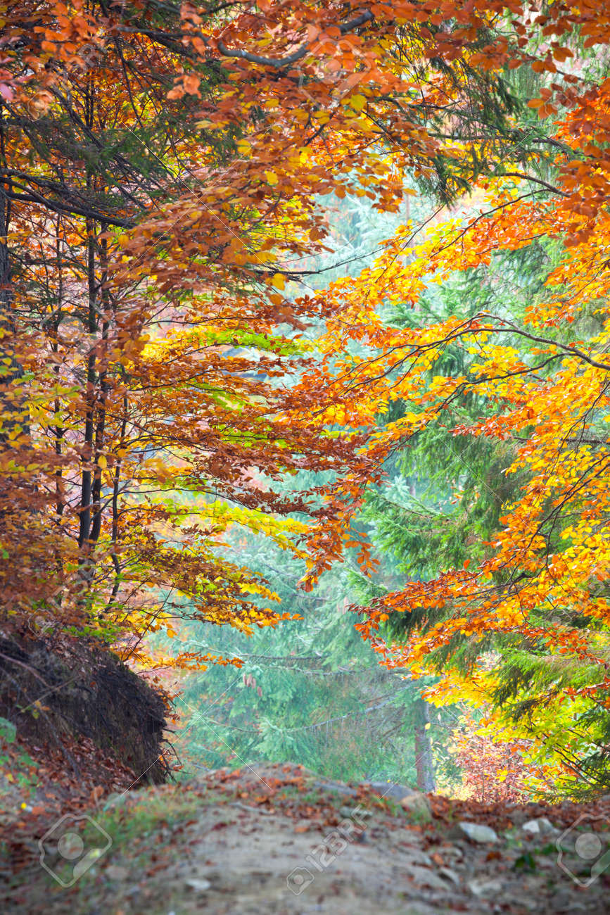 Colorful Autumn Fall Leaves in forest landscape and footpath, vertical - 45935201