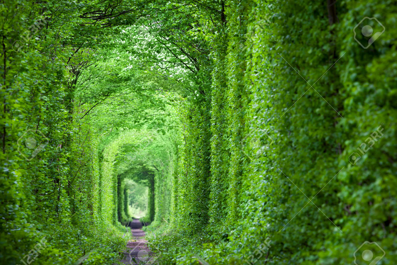 Wonder of Nature - Real Tunnel of Love, green trees and the railroad, Ukraine. - 53248406