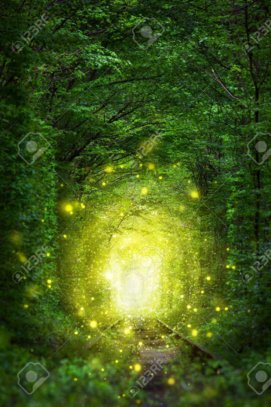 Fantastic Trees Scene- Tunnel of Love with fairy light afar, magic background - 63062297