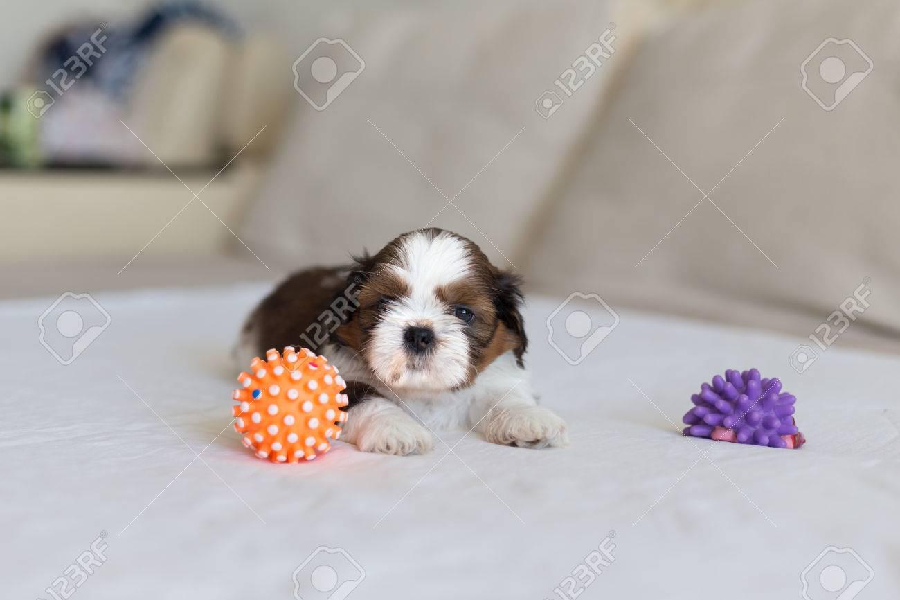 Shih tzu toys