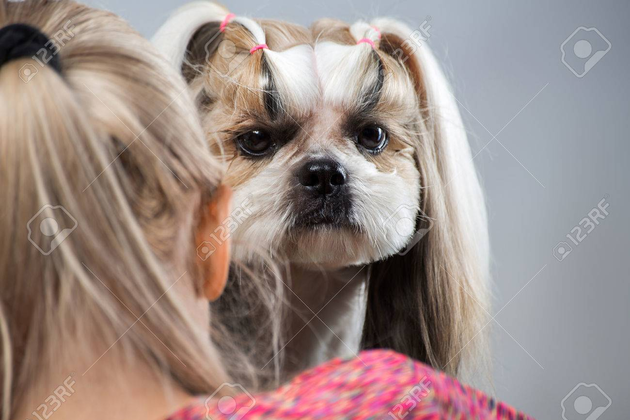 Beautiful Funny Shih Tzu Dog At The Groomer S Table In The Studio Stock Photo Picture And Royalty Free Image Image 85320476
