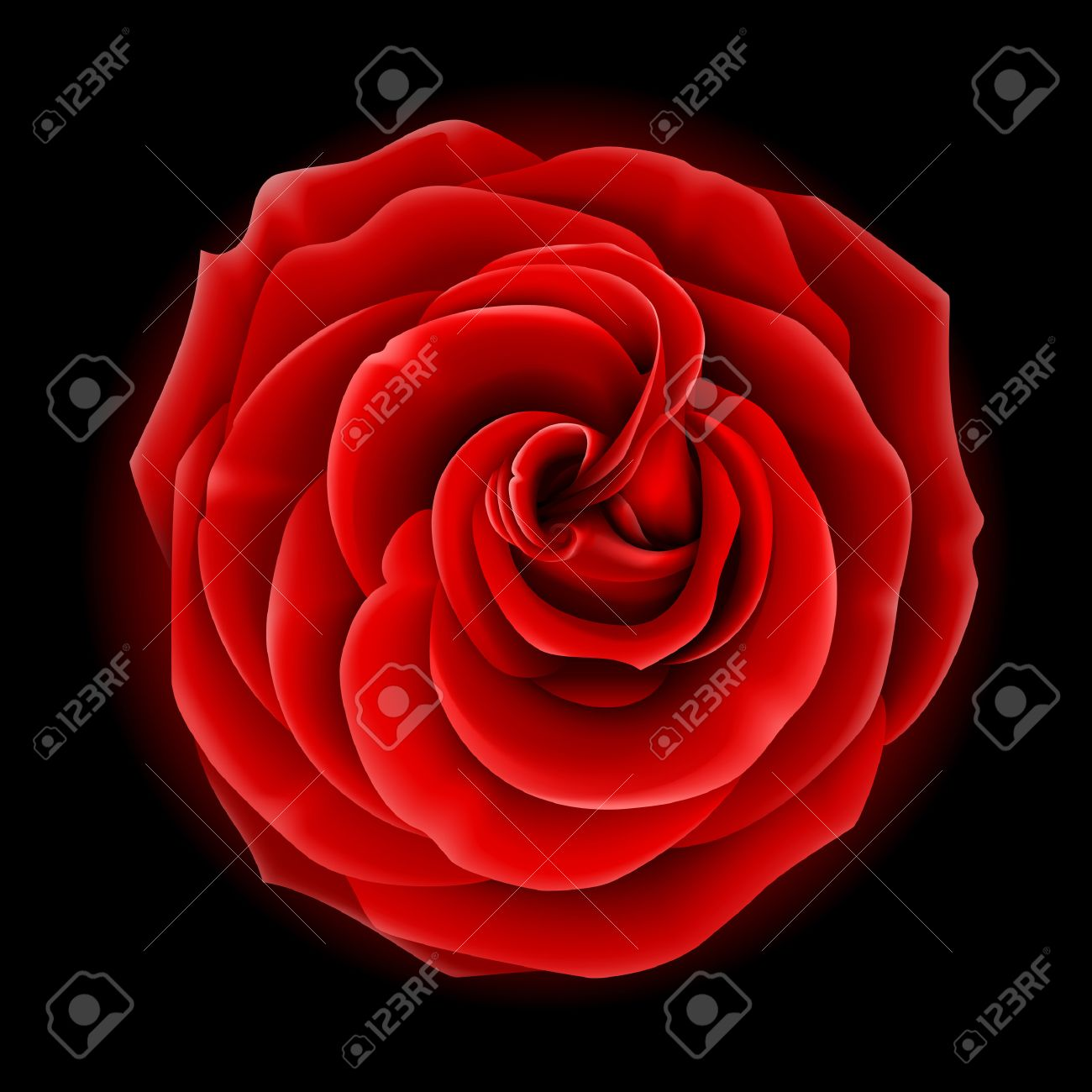 Beautiful vector red rose, symbol of love and passion - 6082469