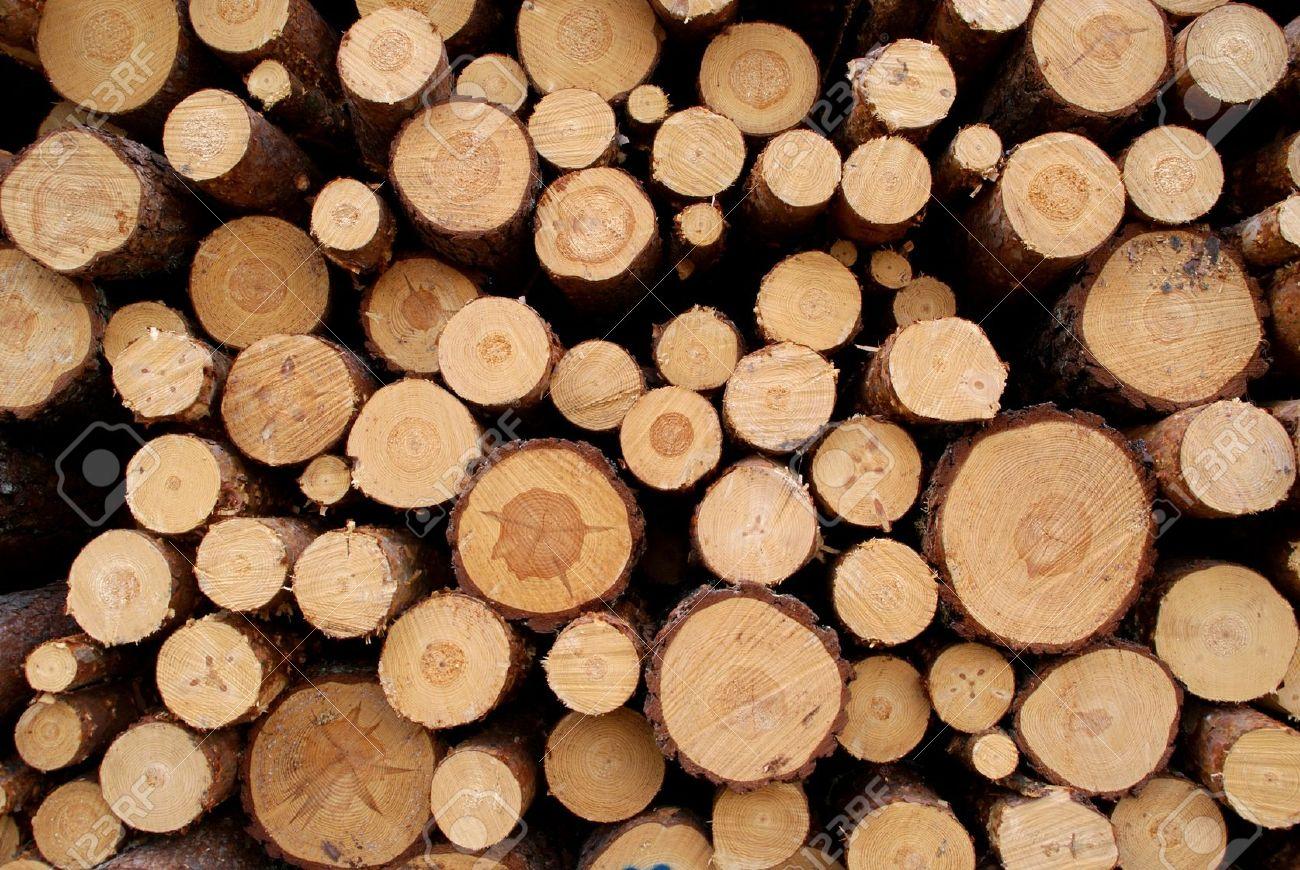 Pine Logs Background - 13196516