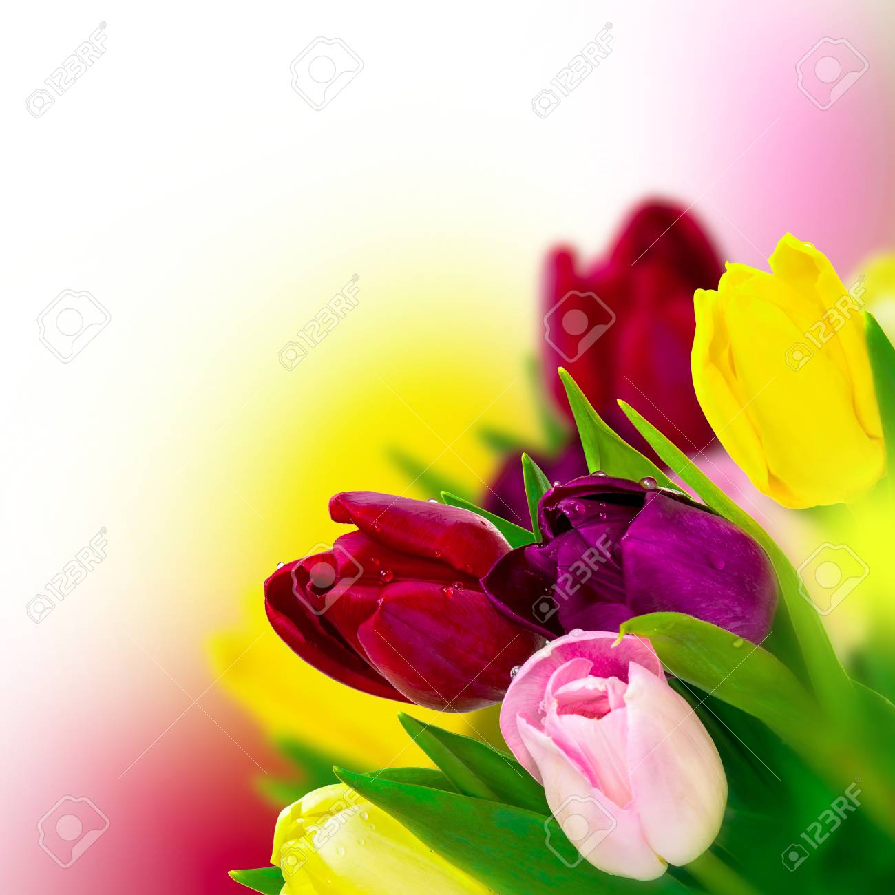 Beautiful Tulip Pink, Red, Purple, Yellow Flower Bouquet Square ...
