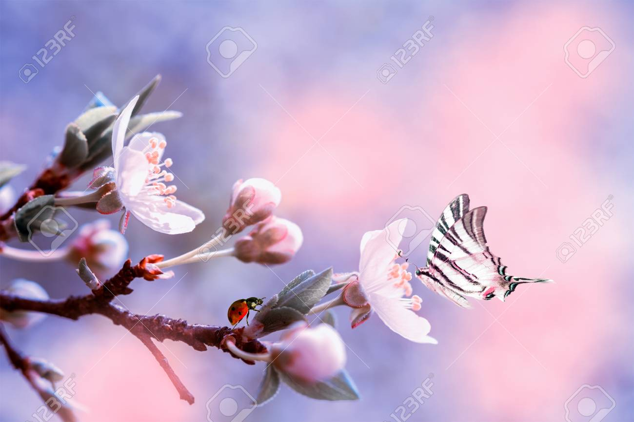 31421ad21 Beautiful sakura flower cherry blossom with ladybug and butterfly. Greeting  card background template. Shallow