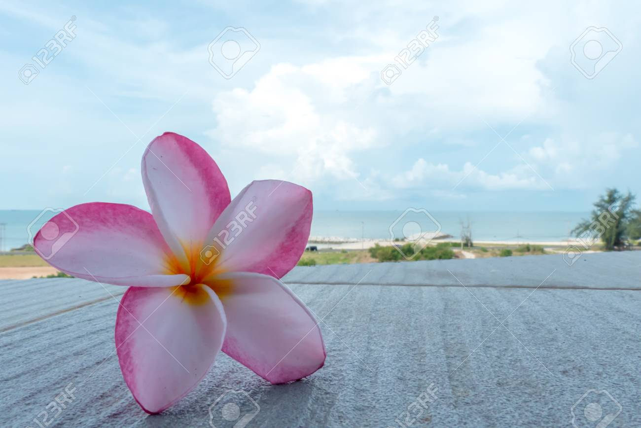 Wellness background  Frangipani Flower On Beach Beautiful Background.Spa And Wellness ...