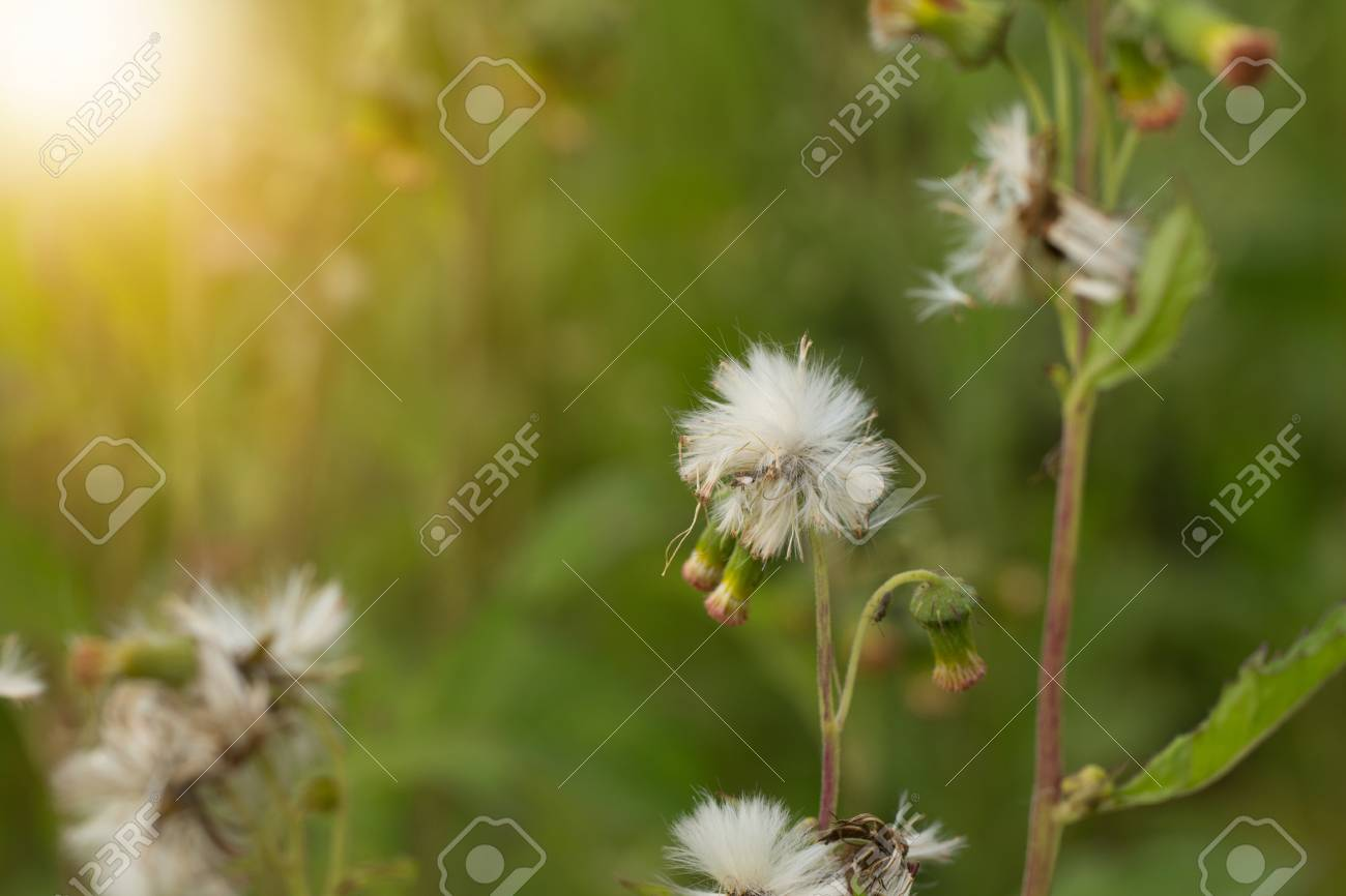 Close up of white meadow flowers in field or grass flower stock close up of white meadow flowers in field or grass flower stock photo 85416397 mightylinksfo