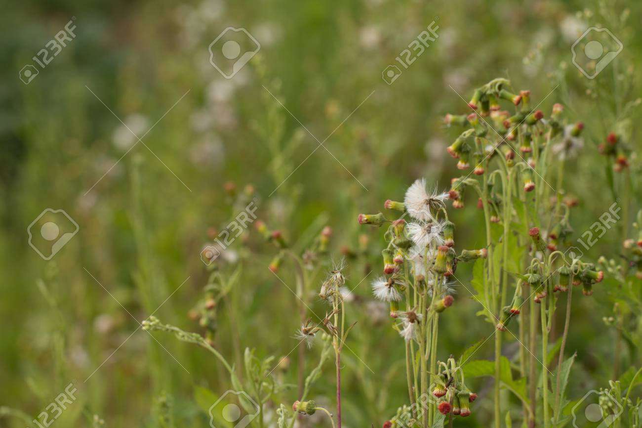 Close up of white meadow flowers in field or grass flower stock close up of white meadow flowers in field or grass flower stock photo 85416532 mightylinksfo