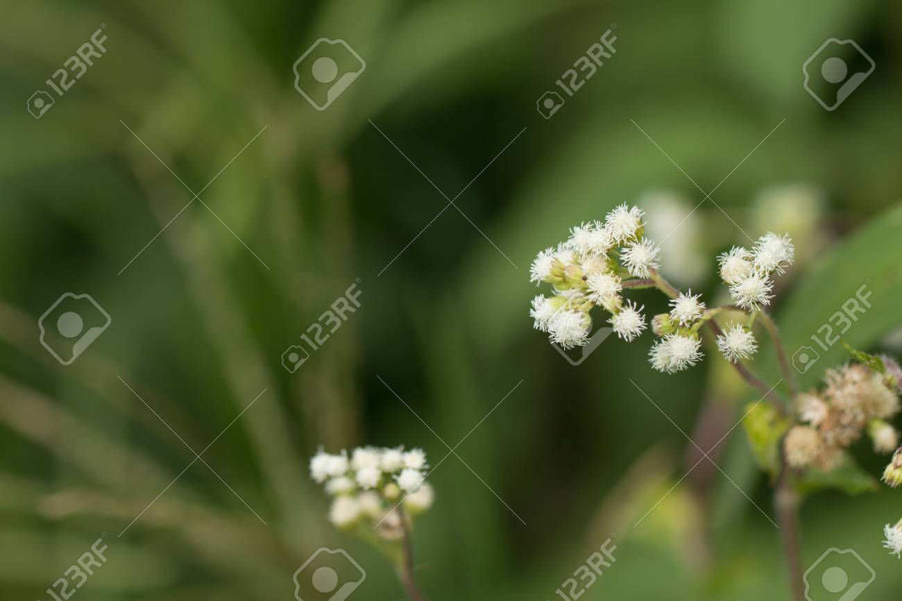 Close up of white meadow flowers in field or grass flower stock close up of white meadow flowers in field or grass flower stock photo 85416666 mightylinksfo