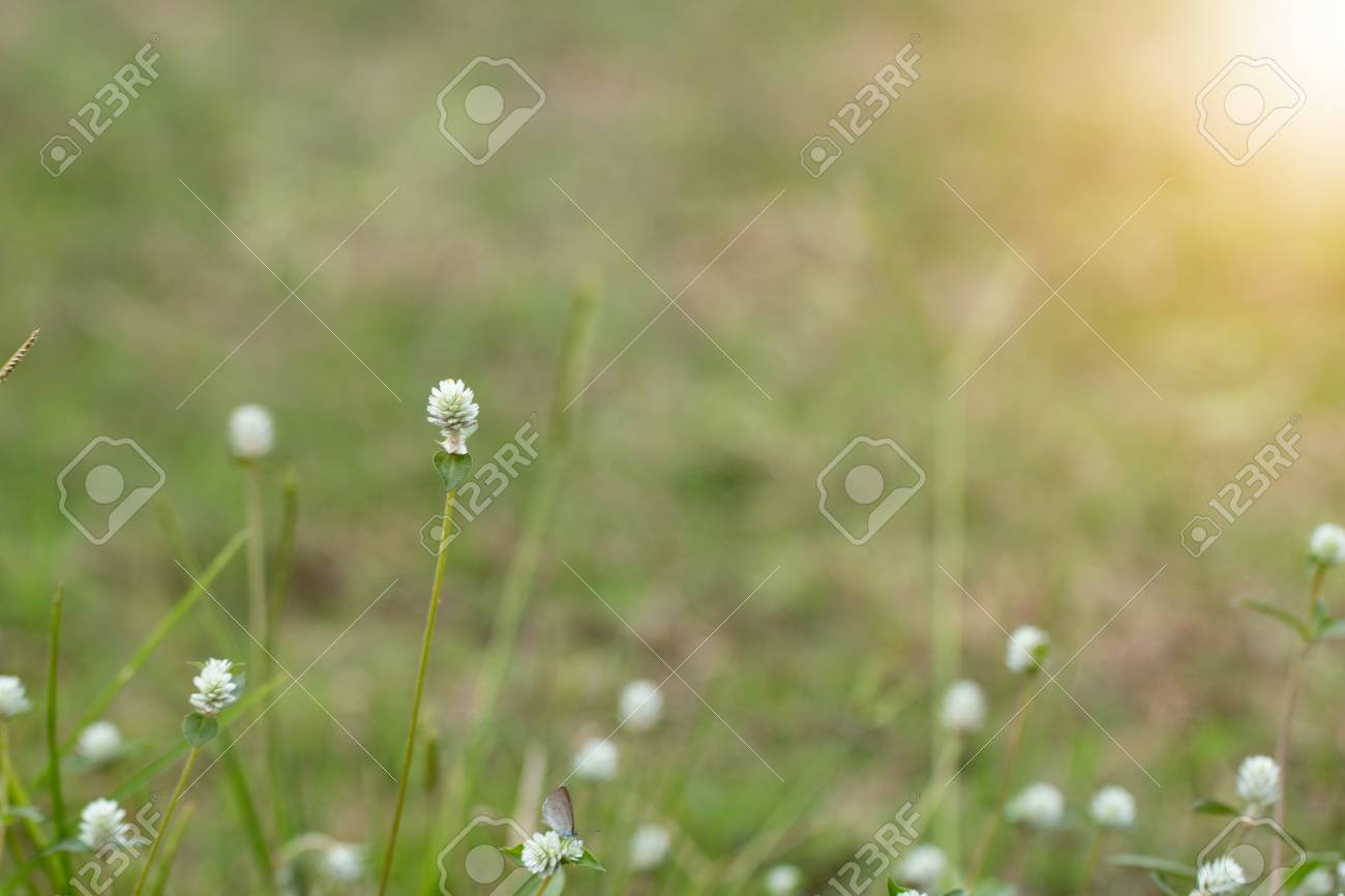 Close up of white meadow flowers in field or grass flower stock close up of white meadow flowers in field or grass flower stock photo 86689519 mightylinksfo