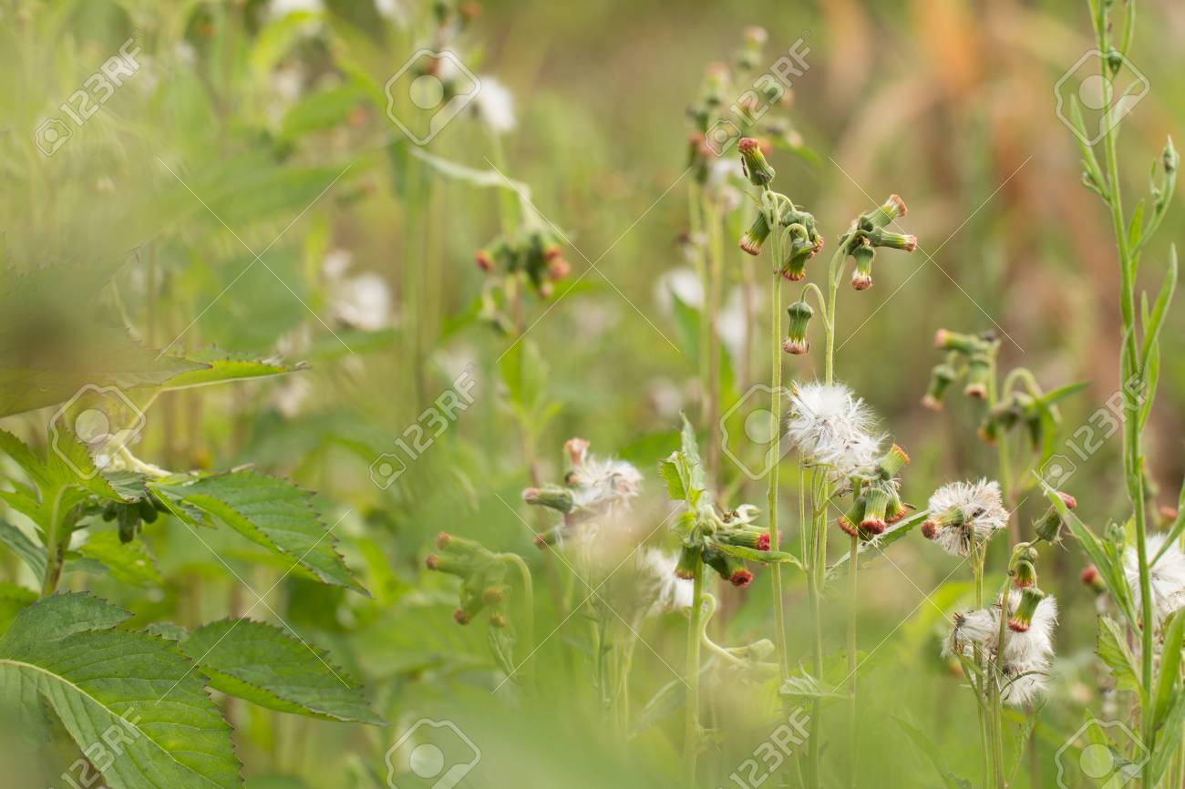 Close up of white meadow flowers in field or grass flower stock close up of white meadow flowers in field or grass flower stock photo 86913077 mightylinksfo