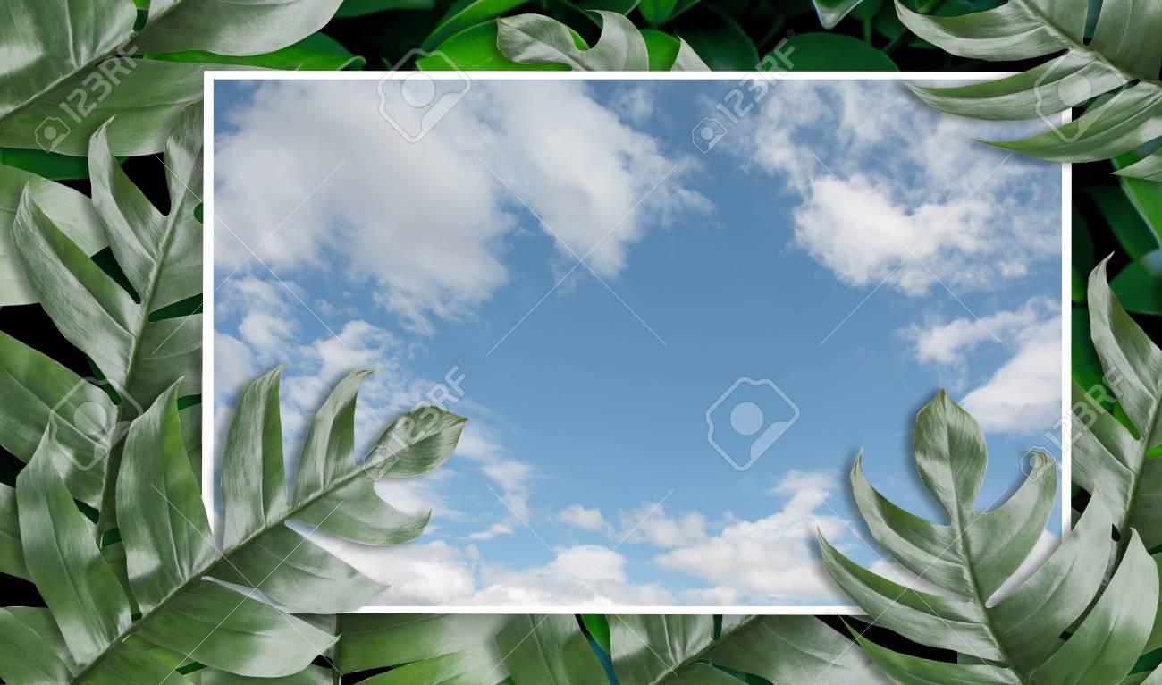 Hojas De Palma Tropical Con Imagen De Marco De Cielo Para Su Diseño ...