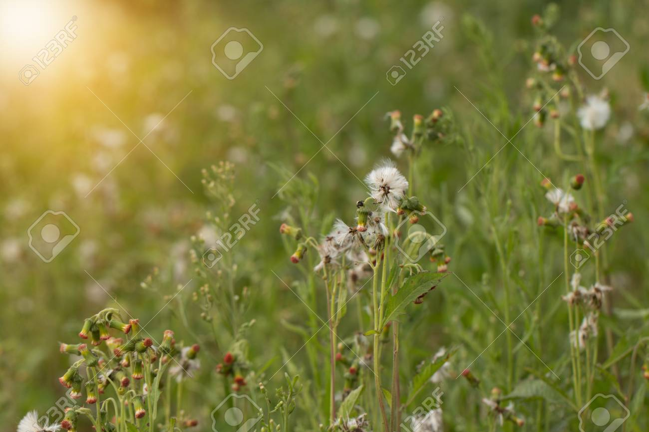 Close up of white meadow flowers in field or grass flower stock close up of white meadow flowers in field or grass flower stock photo 87384430 mightylinksfo