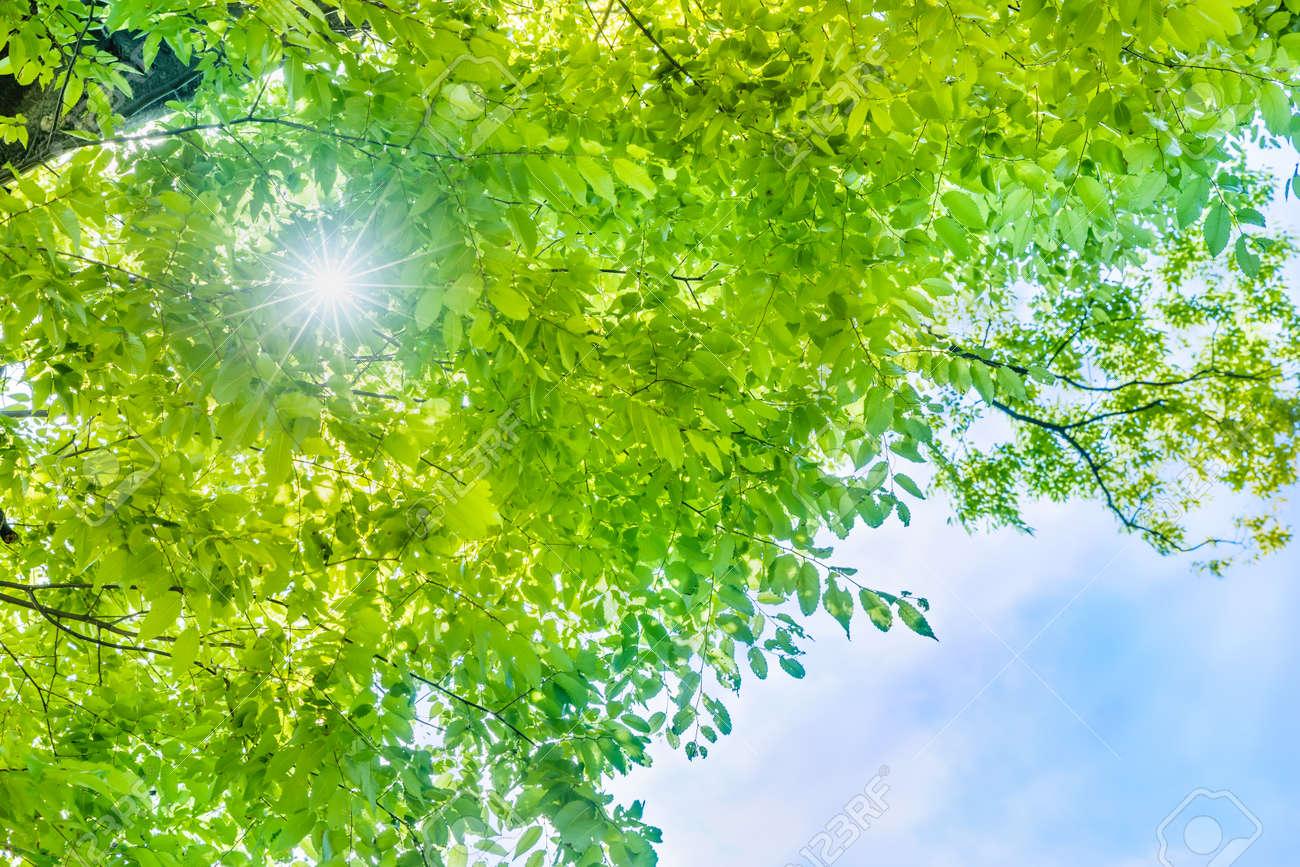Fresh green leaves - 150818981