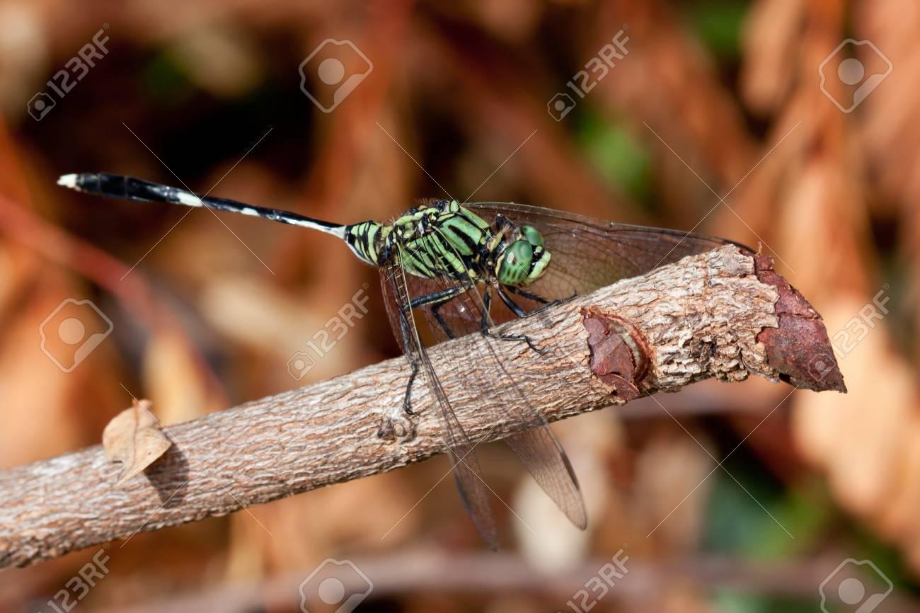 Dragonfly Stock Photo - 8196922