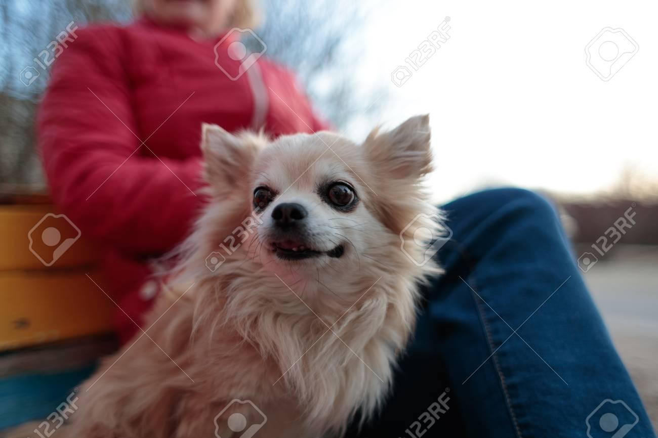 Super Small Fluffy And White Dog Near Its Owner On A Bench Frankydiablos Diy Chair Ideas Frankydiabloscom