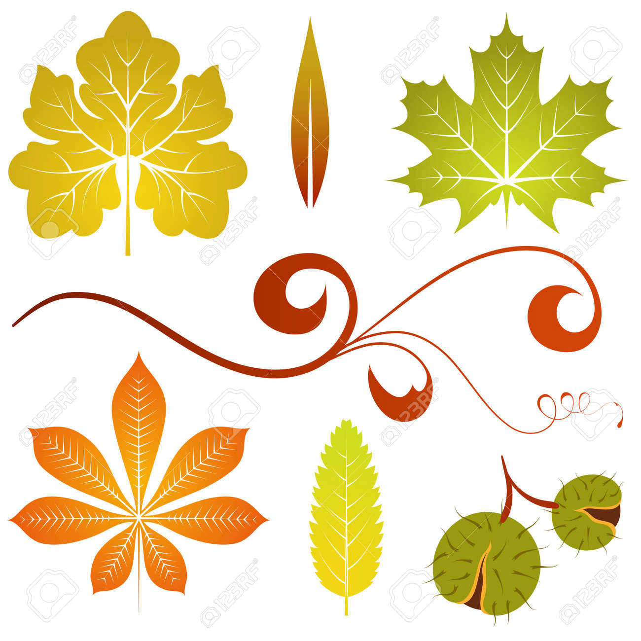 Collect isolated autumn leaves and chestnut, element for design, vector illustration Stock Vector - 9250750