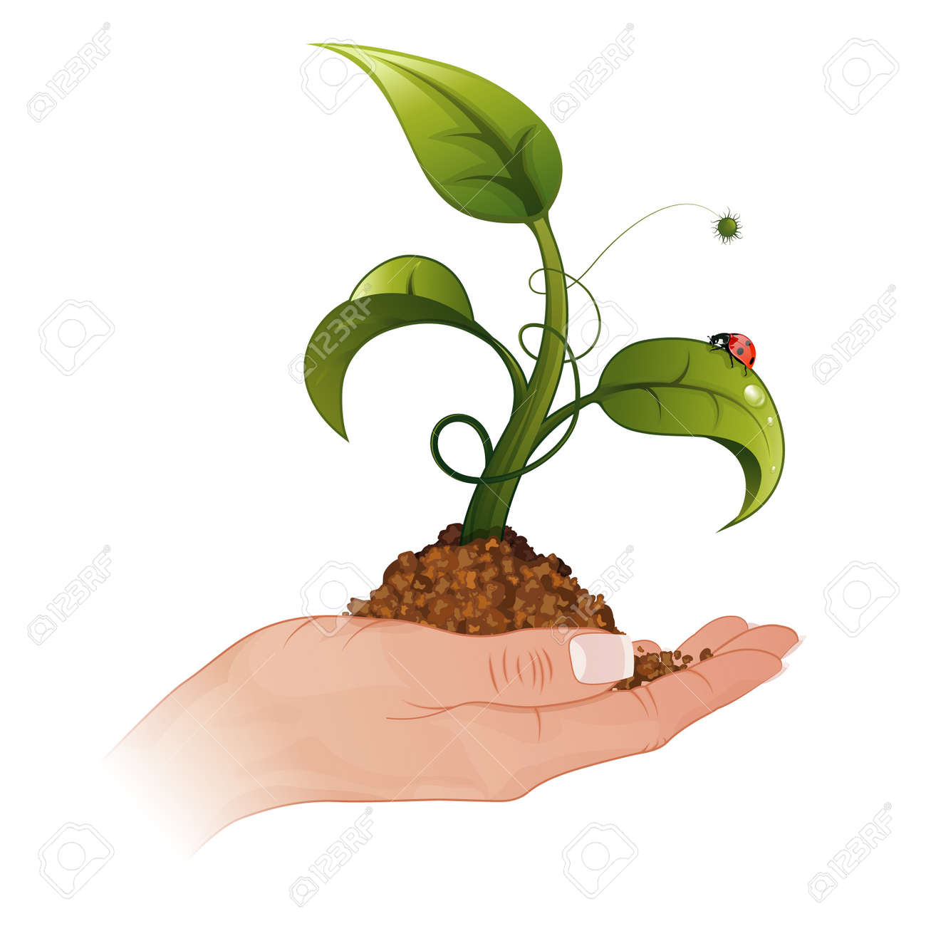 Woman Hand with the Young Green Sprout from the Ground with Water Drops and Ladybug Stock Vector - 12799437