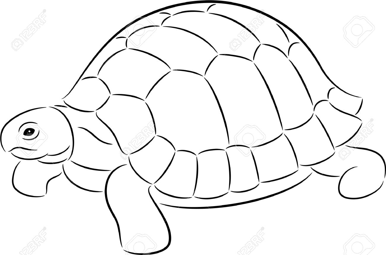 Turtle Shell Turtle Shell Clipart Turtle
