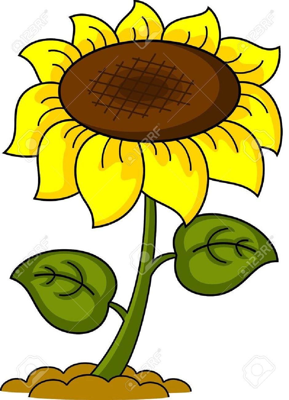 illustration of a cartoon sunflower isolated royalty free