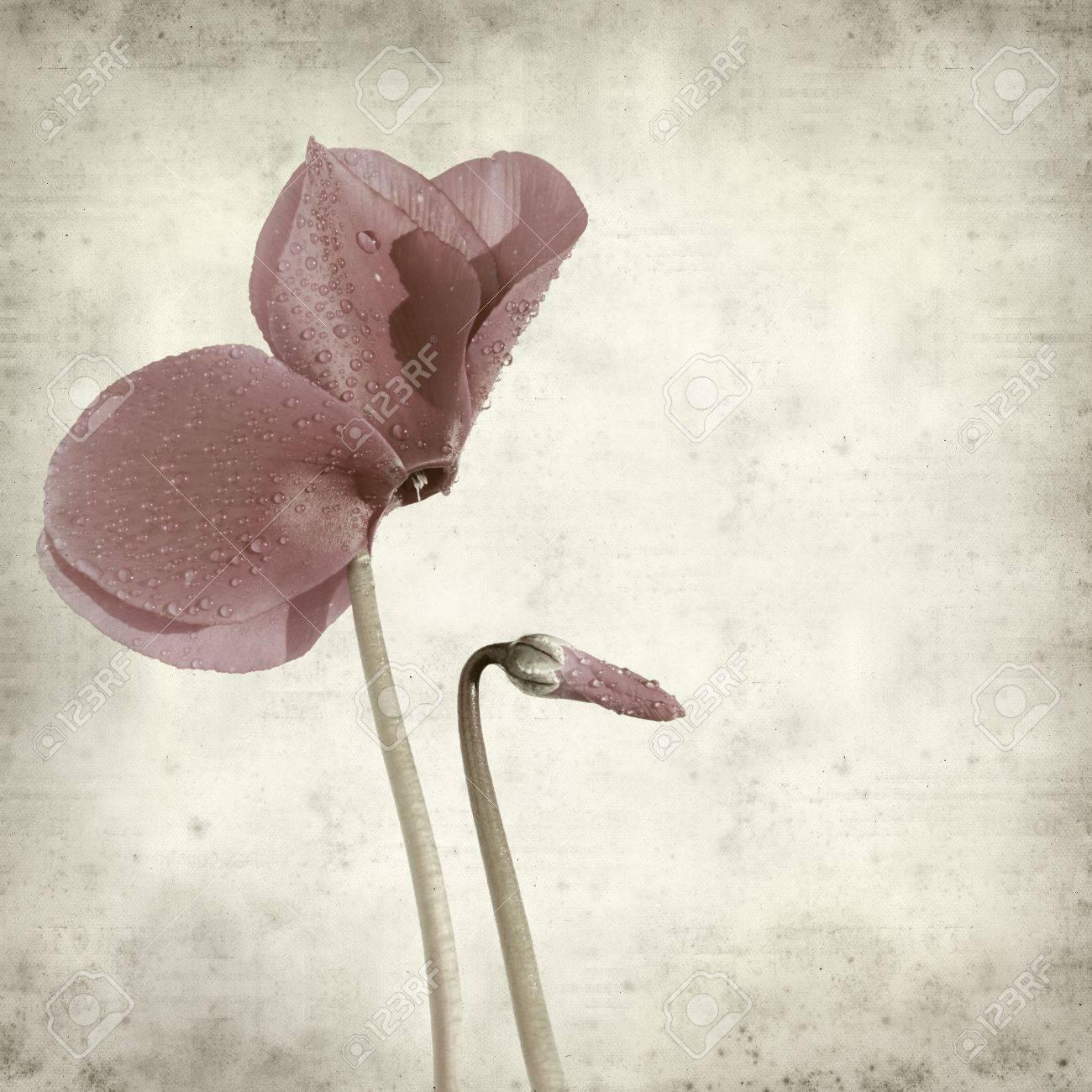 Cyclamen Purple Purple Cyclamen Flower