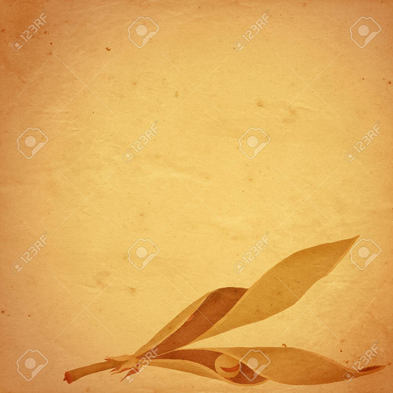 old paper background with sweetpea pod with one last pea remaining Stock Photo - 10832629