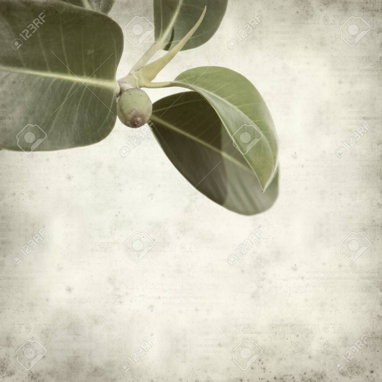 textured old paper background with small branch of fig tree Stock Photo - 17456605