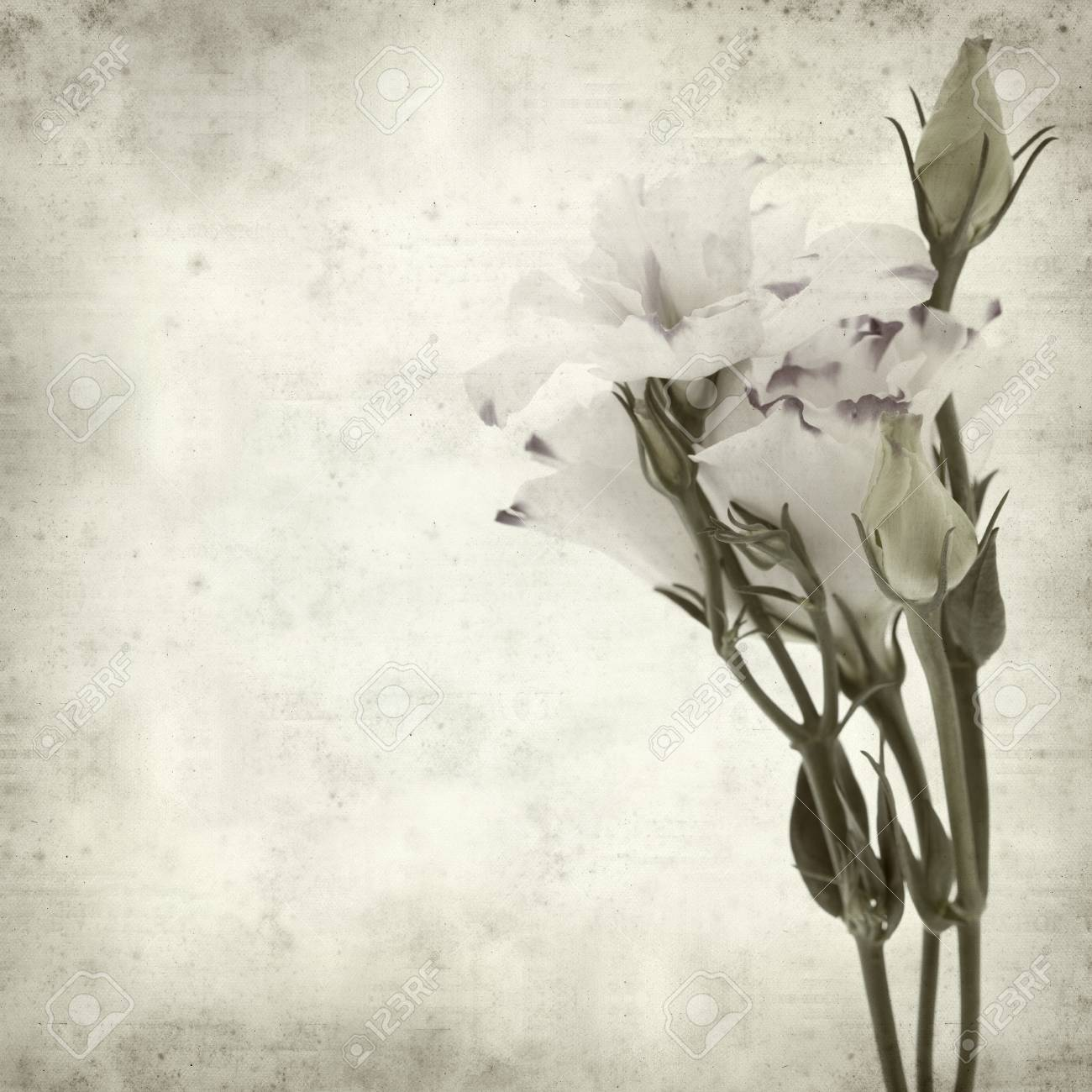 Textured Old Paper Background With White And Blue Lisianthus Stock