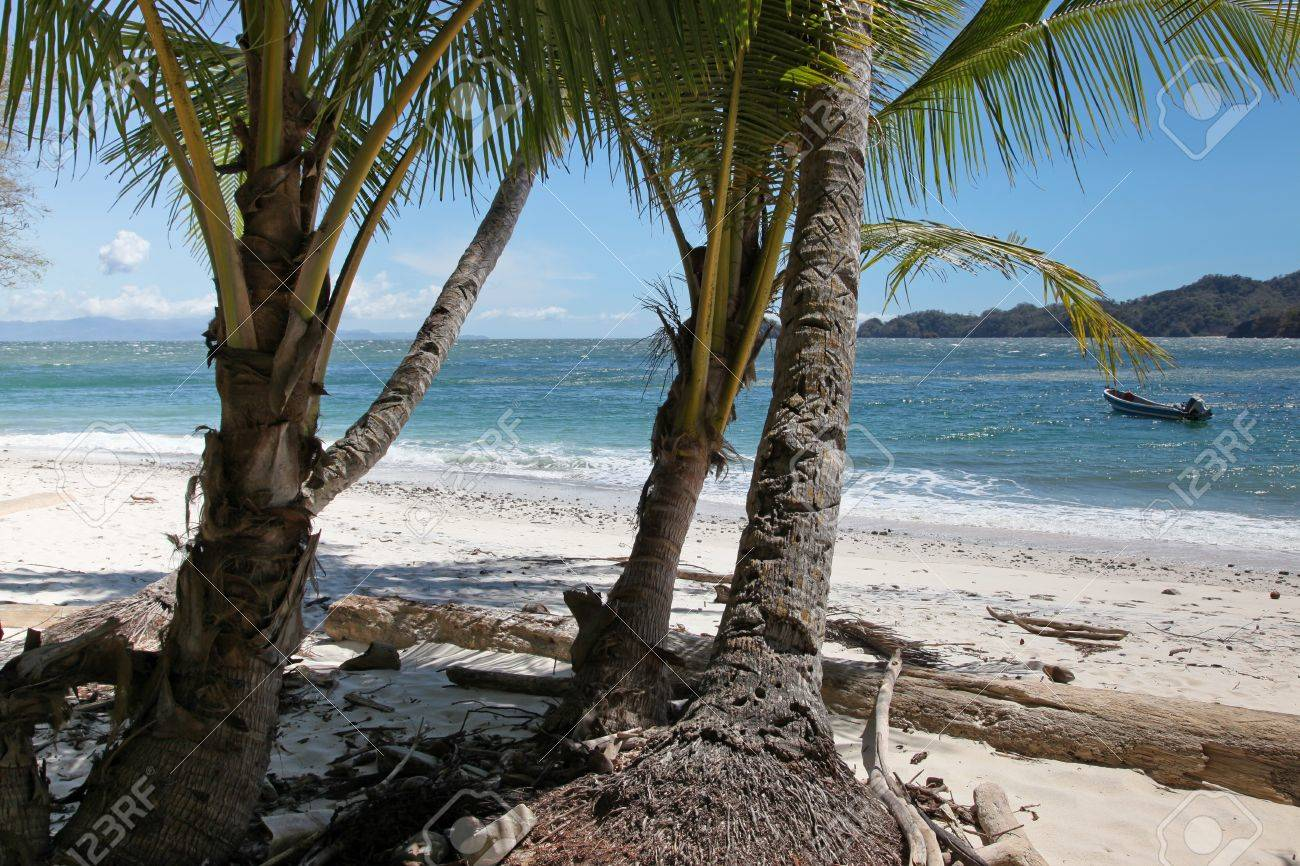 Looking out from behind three palm trees to a secluded beach, blue ocean, and mountainous islands in tropical Costa Rica. Stock Photo - 10692488