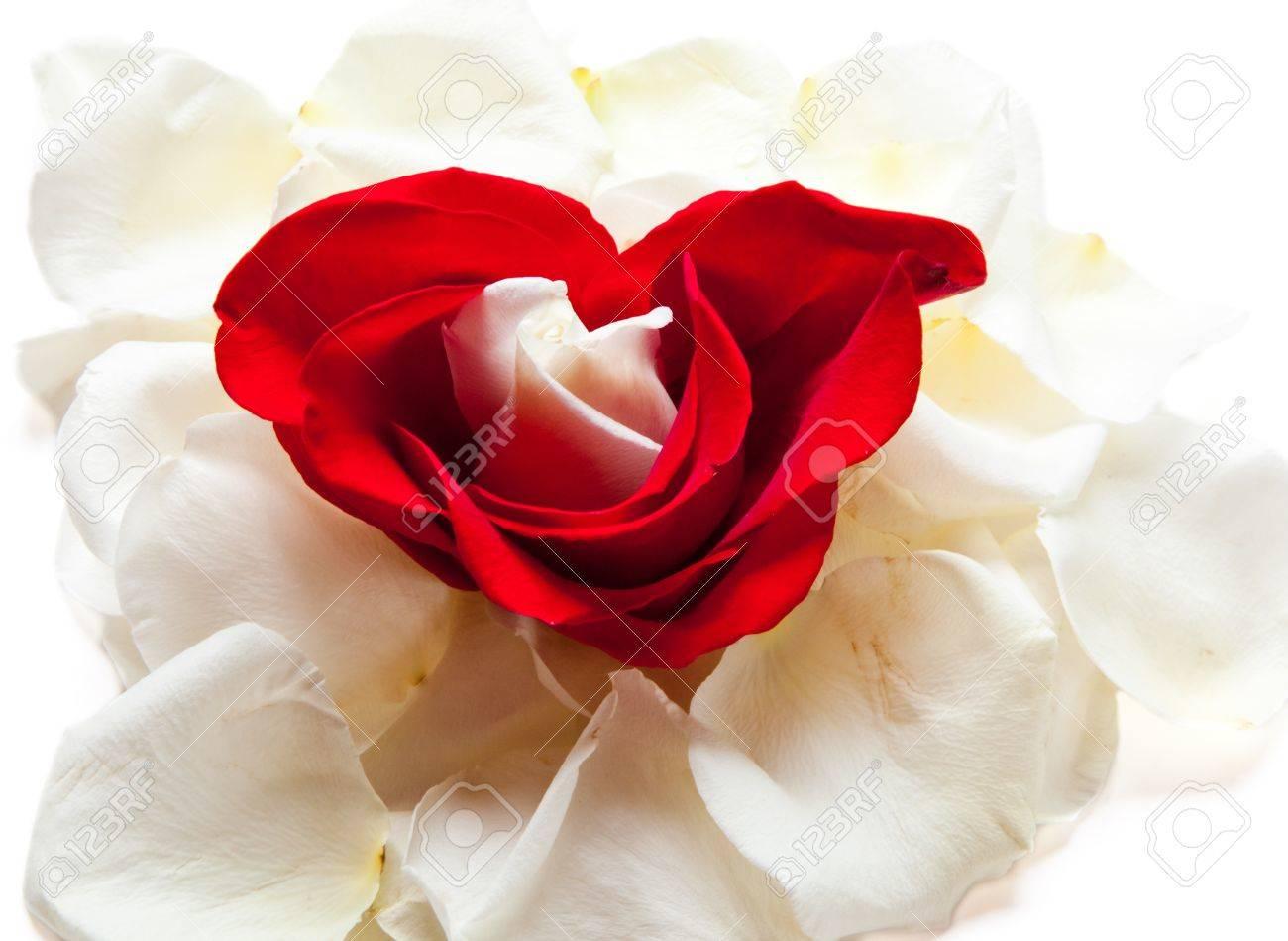 Un Pequeño Capullo De Rosa Blanca Se Enmarca En Forma De Corazón ...