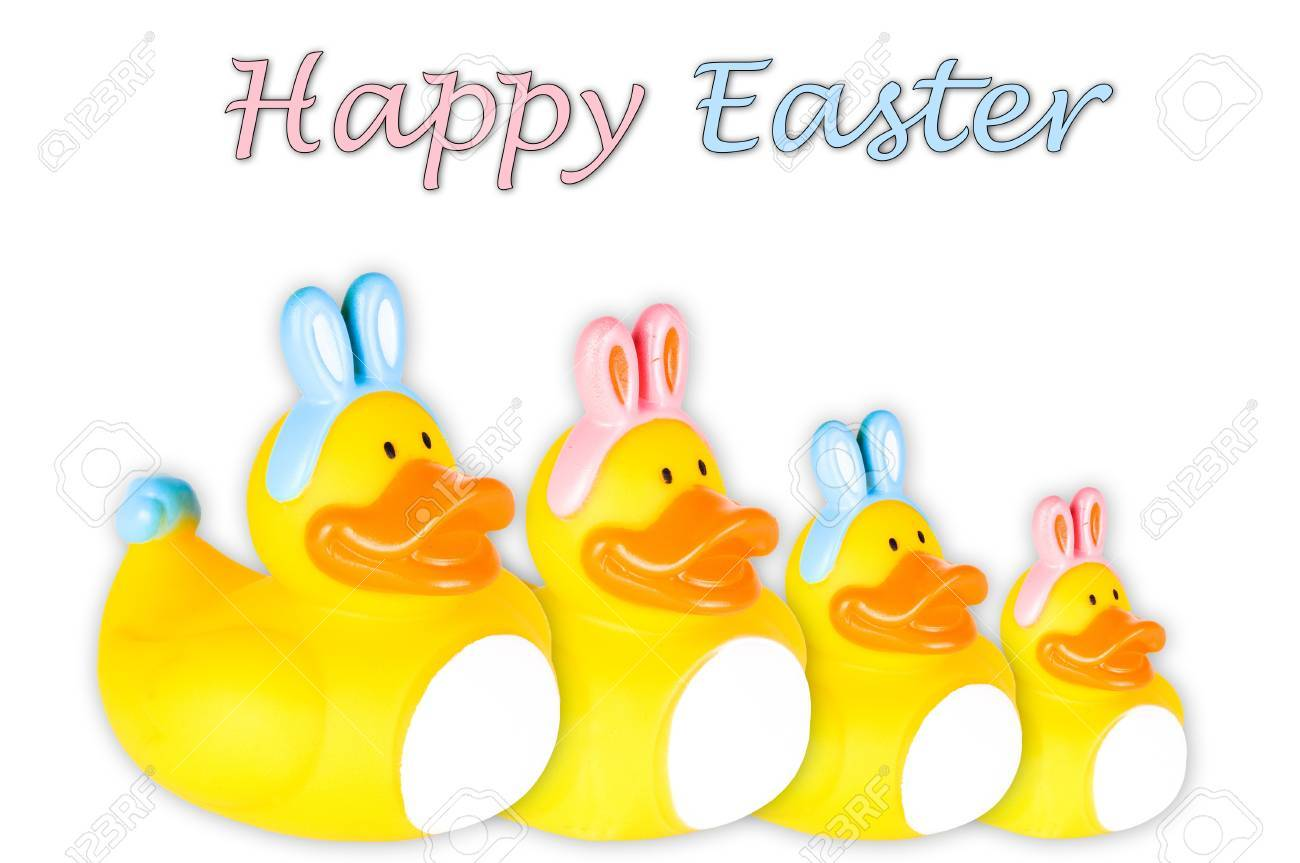 Rubber duckies with pink and blue Easter bunny ears and tail   Isolated on White Stock Photo - 18082976