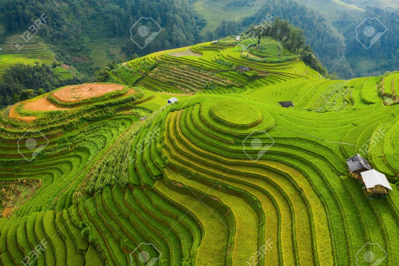 Aerial top view of paddy rice terraces, green agricultural fields in countryside or rural area of Mu Cang Chai, Yen Bai, mountain hills valley at sunset in Asia, Vietnam. Nature landscape background. - 131362636
