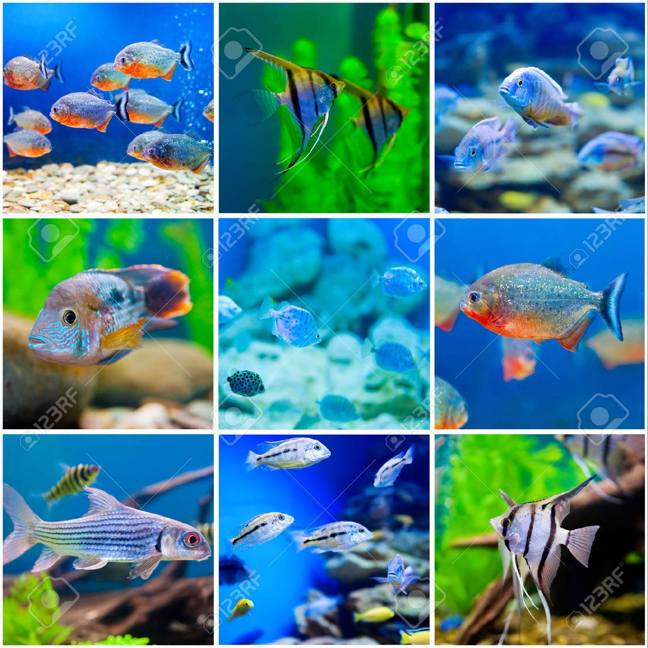 collection photos from saltwater world in aquarium - 37923821
