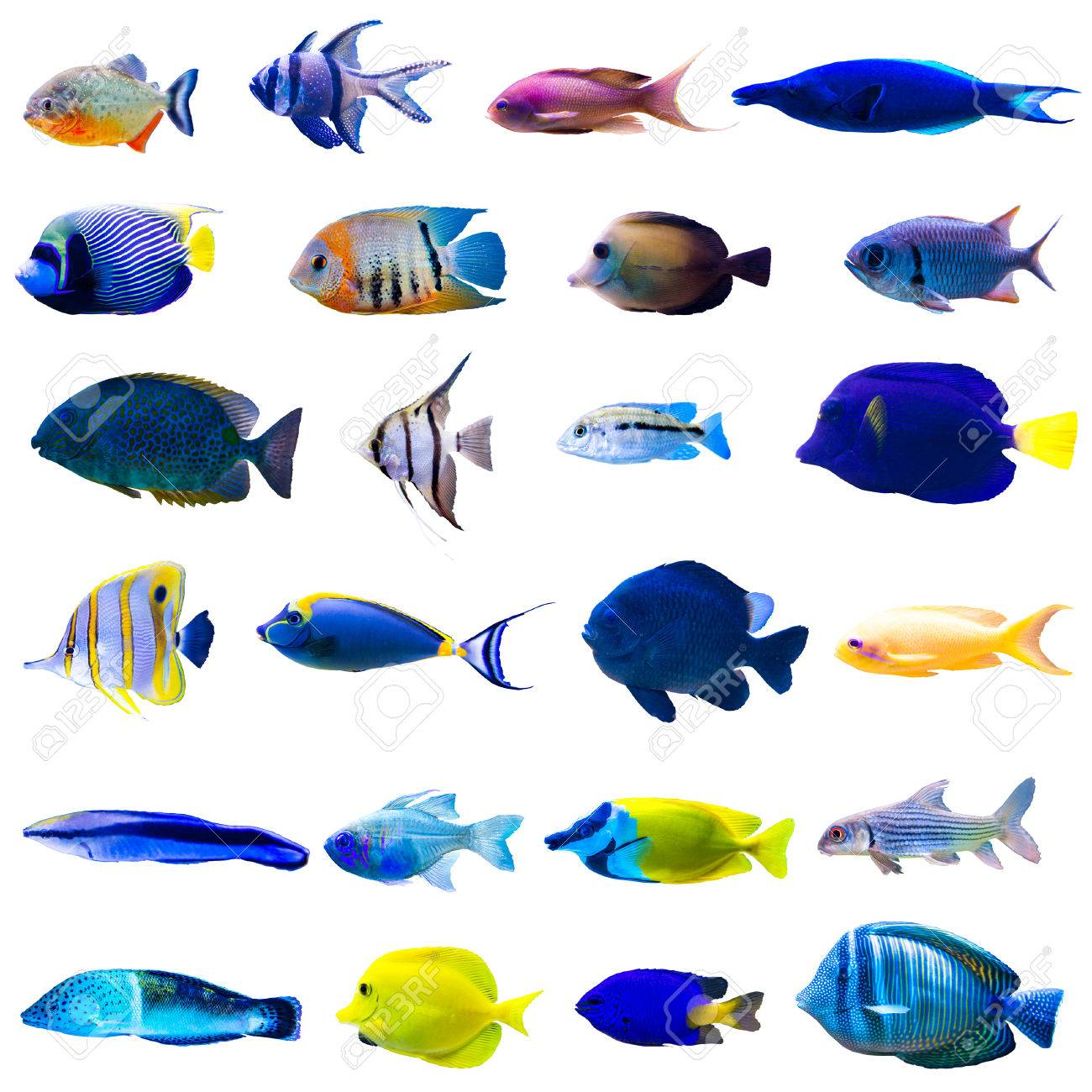 Tropical fish collection isolated on white background - 38428255