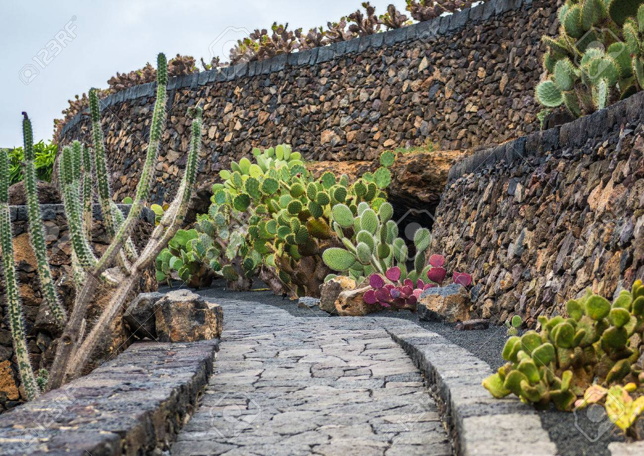 view of cactus garden jardin de cactus in guatiza lanzarote canary islands
