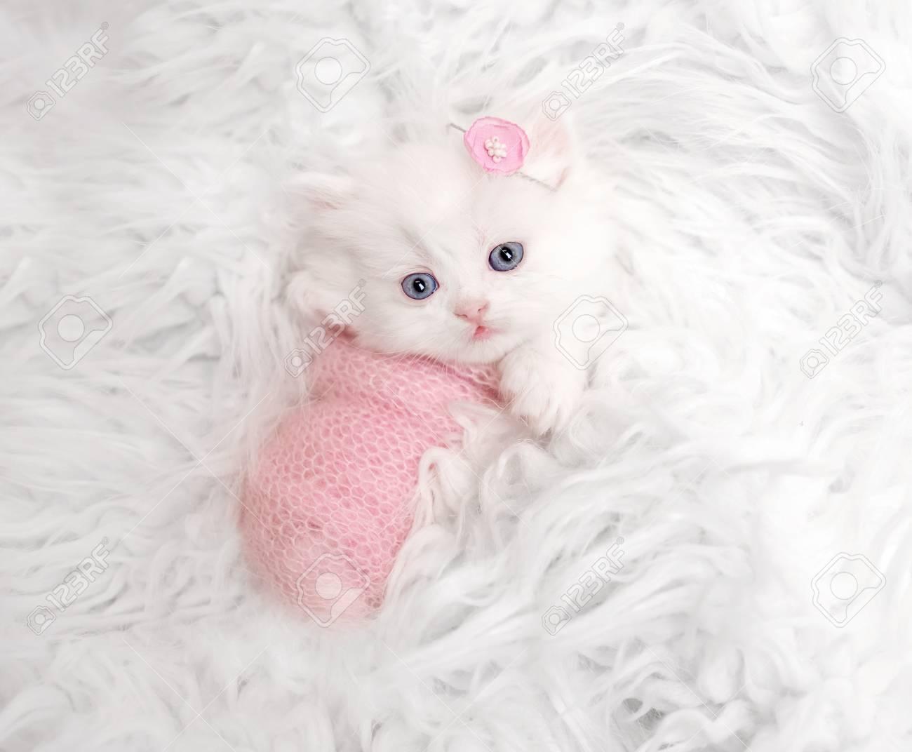 newborn Scottish kitten on white fur - 112912883