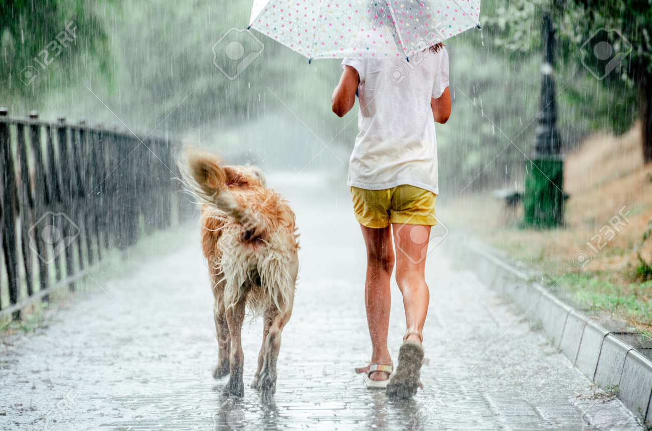 Girl with golden retriever dog in rainy day - 173016395