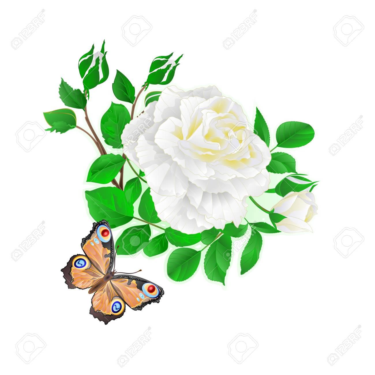fleur blanche rose et bourgeons et un papillon vintage fond festif rh fr 123rf com