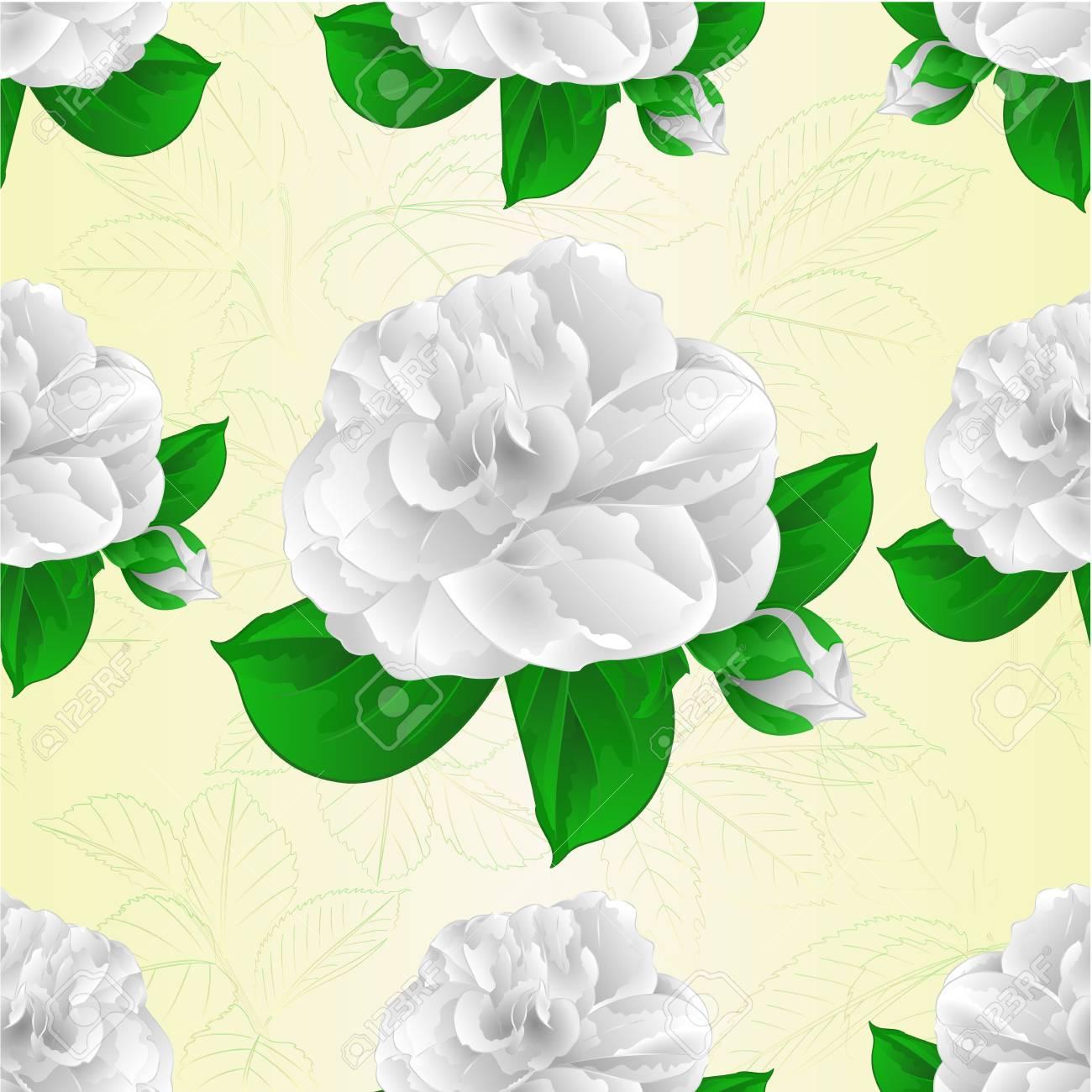 Texture Transparente Camelia Japonica Blanc Fleur Avec Bud
