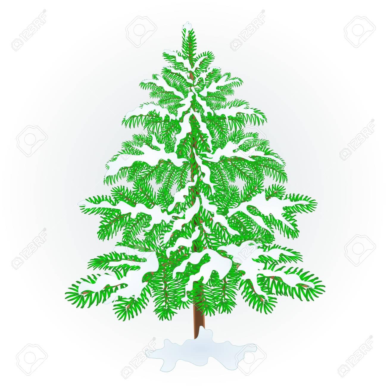 Spruce Christmas Tree With Snow Vintage Vector Illustration Editable