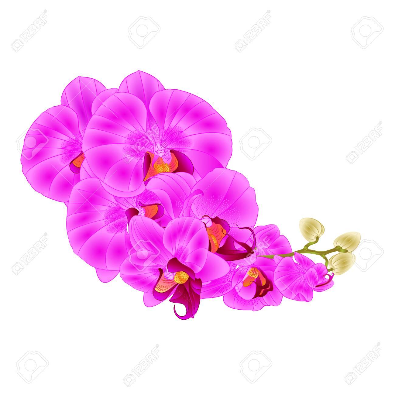 蘭の花紫の花胡蝶蘭熱帯植物ビンテージ ベクトル ボタニカル イラスト